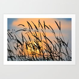 Sunrise Grass Art Print
