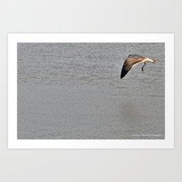 The Birds of Cutler Bay Wetlands (Amazing Grace!) Art Print
