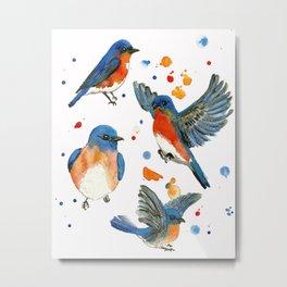 Bluebird Study Metal Print