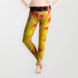 A Yellow Dahlia with Pink tips Leggings