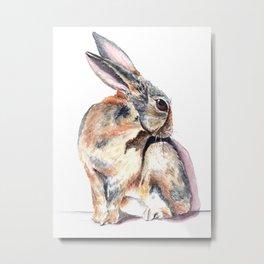 Cottontail Rabbit Metal Print