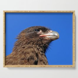 Striated Caracara Serving Tray