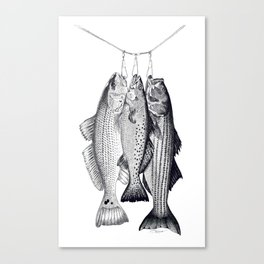 3 Amigos - Red Drum, Sea Trout, Striped Bass Canvas Print