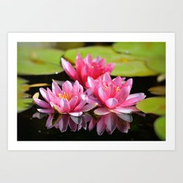 Water Lilly Triplets Art Print