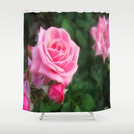 Pink Roses in Anzures 1 Shower Curtain
