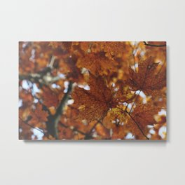 leaves I Metal Print