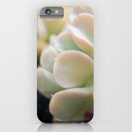 Succulent 4 Botanical / Nature Photograph iPhone Case