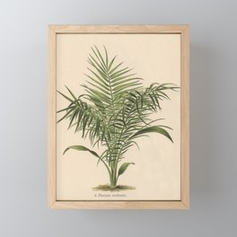 1800s Encyclopedia Lithograph of Date Palm Framed Mini Art Print
