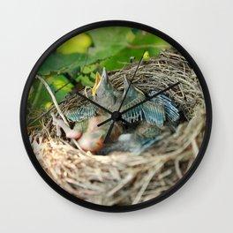 Azores blackbird nest Wall Clock