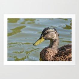A Duck!!! Art Print