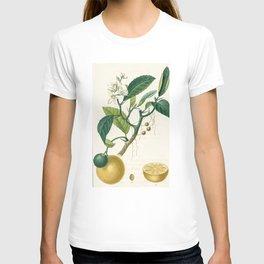 Lemon tree Vintage illustration T-shirt