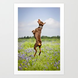 Spring In Texas Art Print