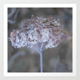 Frost Petals Of Hydrangea #decor buyart #society6 Art Print