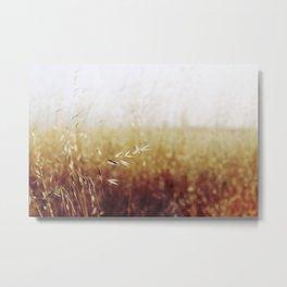 Calistoga Wheat Metal Print