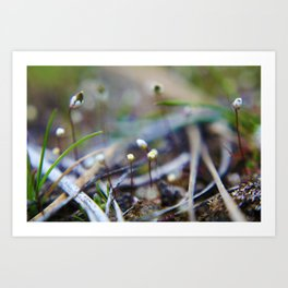 Small Things Art Print