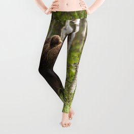 Amazing Huge Adult Grizzly Bear Strolling Proudly Across Wood Clearing Ultra HD Leggings