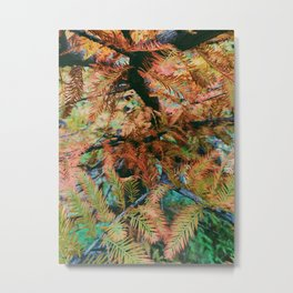 This is the Taxodium distichum Metal Print