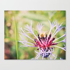 Spring Time Bumble Bee on a Purple Flower Canvas Print