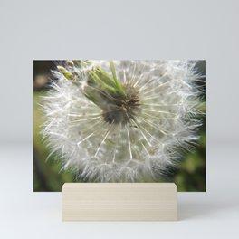 Close Your Eyes And Make A Wish Mini Art Print