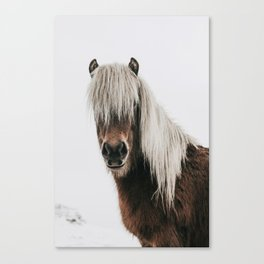 Icelandic Horse - Pony Photo Canvas Print