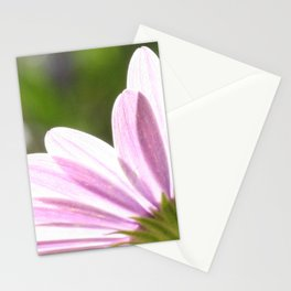 Pink African Daisy in the Light Stationery Cards