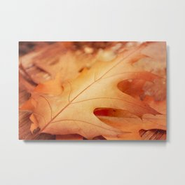 AFE Autumn Leaves, Nature Photograhy Metal Print