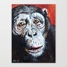 Chimpanzee: One Survivor Canvas Print