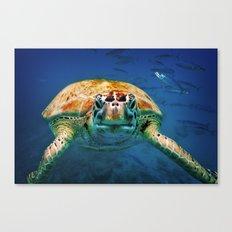 Bajan Turtle Canvas Print