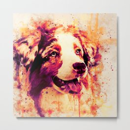 australian shepherd dog 2 wslsh Metal Print