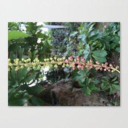 Barringtonia acutangula Canvas Print