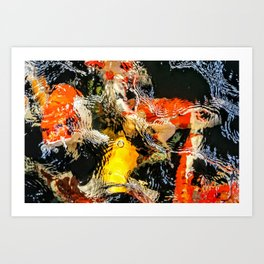 Coy Koi Art Print