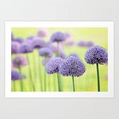 Allium dreams Art Print