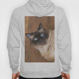 Ragdoll Cat Hoody