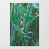 clover Canvas Prints featuring Clover by Christine baessler