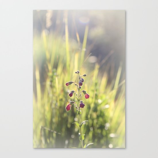 summer dream Canvas Print