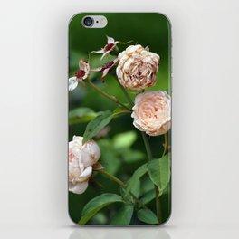 Cream Roses iPhone Skin