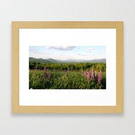 Lupinescape Framed Art Print