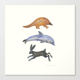 Pangolin, dolphin and a hare Canvas Print