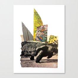 Tartaruga Canvas Print
