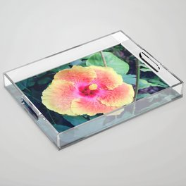 Pink and Yellow Hibiscus Tropical Flower Acrylic Tray