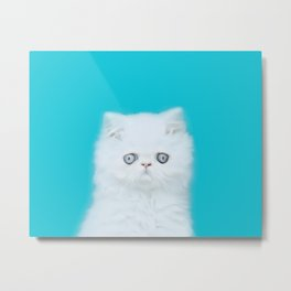 Lord Aries Cat - Photography 001 Metal Print