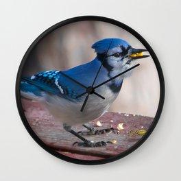 March Blue Jay Wall Clock