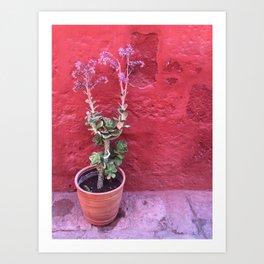 Arequipa Plants v.3 Art Print