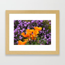 Poppies And Purple Lantana Framed Art Print