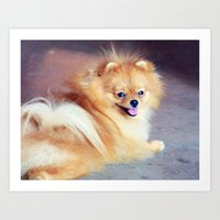 pomeranian Art Prints featuring PRECIOUS POMERANIAN by Allyson Johnson