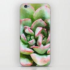 Spring Succulent iPhone & iPod Skin