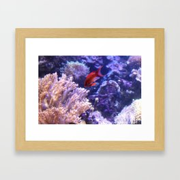 Lonely Fish Framed Art Print