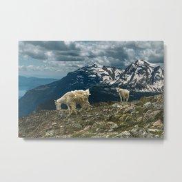 Glacier Mountain Goats Metal Print