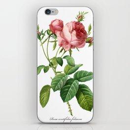 Vintage Rose - Redoute's Rosa Centifolia Foliacea iPhone Skin