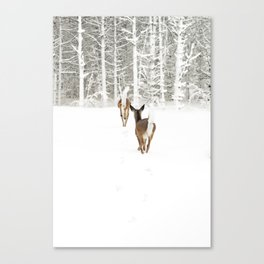 Doe In Winter Canvas Print